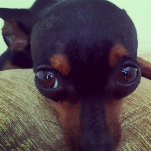 Cão. Caochupandomanga WTF ? Uglydog Ew