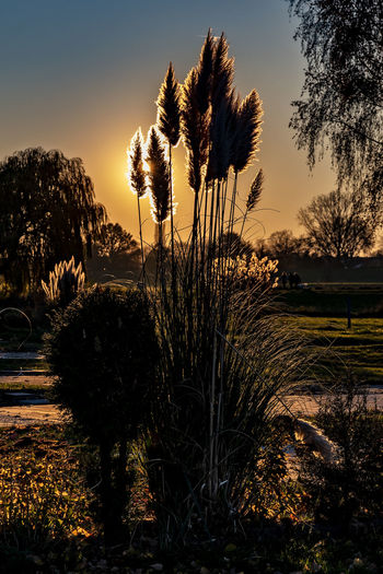 backlight Capture Tomorrow Plant Sky Growth Sunset Beauty In Nature Tranquility Tree Tranquil Scene Scenics - Nature No People Nature Cloud - Sky Field Land Sunlight Silhouette Non-urban Scene Environment Outdoors Landscape