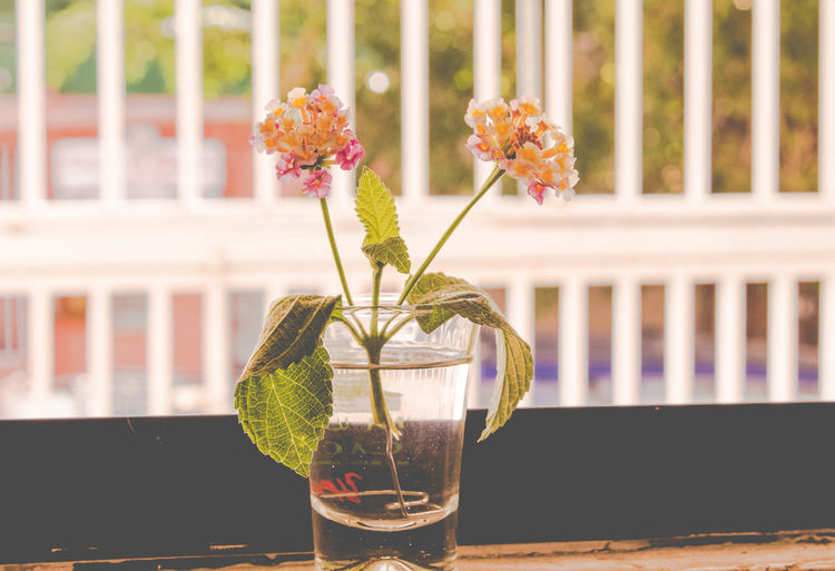 Live Beauty In Nature Close-up Day Drink Drinking Glass Flower Flower Head Focus On Foreground Food And Drink Fragility Freshness Nature No People Outdoors Plant Refreshment Table Vase