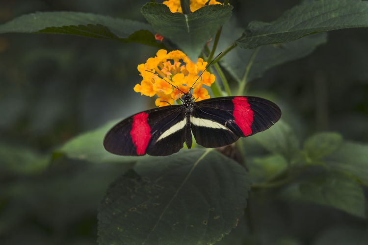 Close-up of butterfly on plant