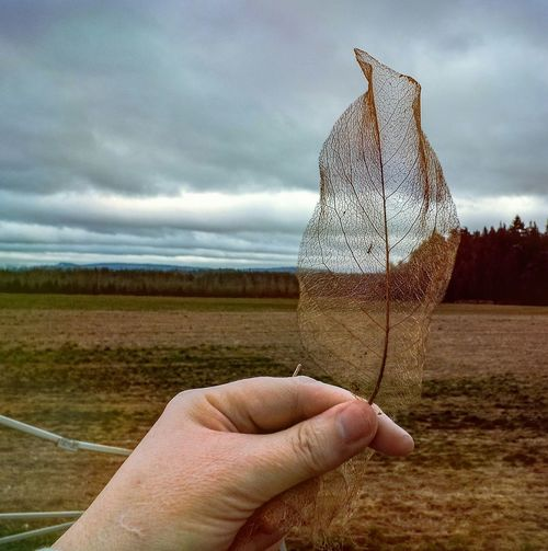 Cropped Image Of Person Holding Dry Leaf On Field Against Sky