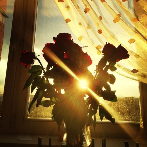 Couchpotato Vegging Out Flowers Roses))) Photo