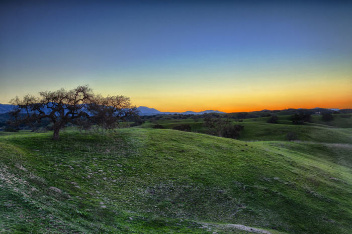 Early morning sunrise in the foothills of Los Olives, CA Beauty In Nature California Clear Sky Field Grass Grassy Horizon Over Land Idyllic Landscape Los Olivos Nature Non-urban Scene Rural Scene Scenics Sky Sunrise Tranquil Scene Tranquility Tree