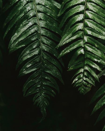A world within. Be. Ready. Leaf Green Color Growth Nature Plant Fern Close-up Day Freshness No People Frond Fragility Outdoors Palm Tree Fresh On Market 2017