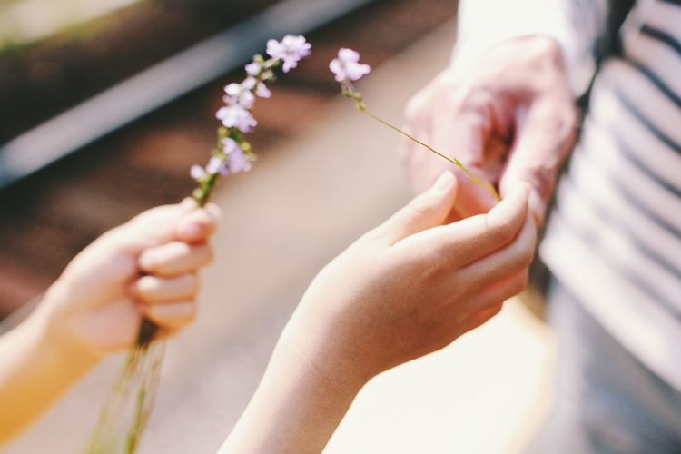 Close-up of hands holding flowers outdoors