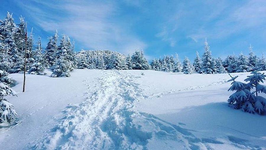 Winter Wintertree Slovakia Velkychoc Cesta_na_velky_choc Výlet Slovakia Orava Staledokopca Tesim_sa_na_vyhlad
