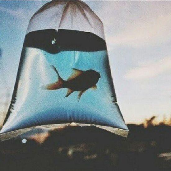 Dia de lavar o aquário...