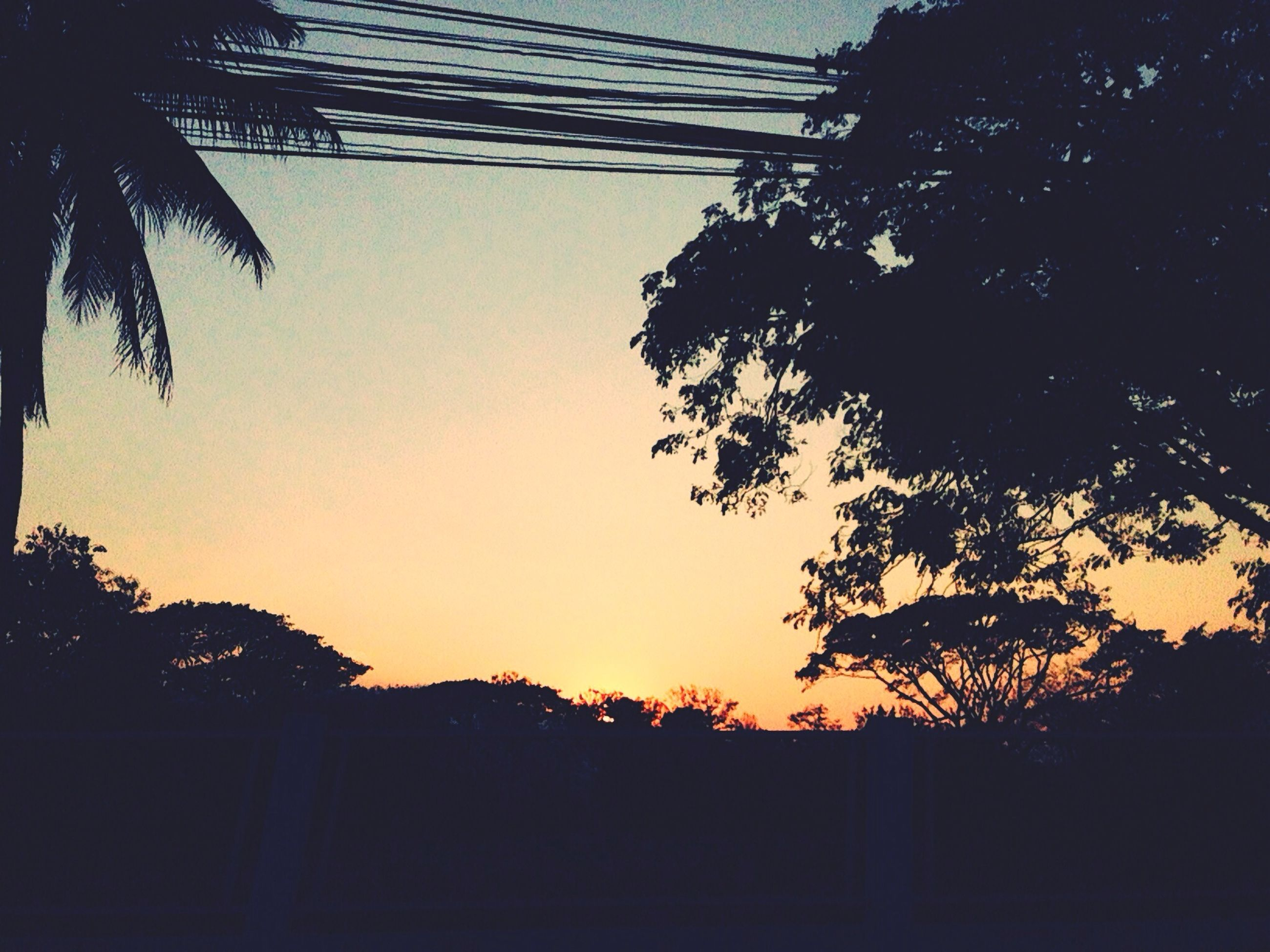 silhouette, sunset, tree, clear sky, low angle view, copy space, nature, growth, orange color, tranquility, beauty in nature, sky, scenics, tranquil scene, dusk, branch, outline, no people, outdoors, built structure