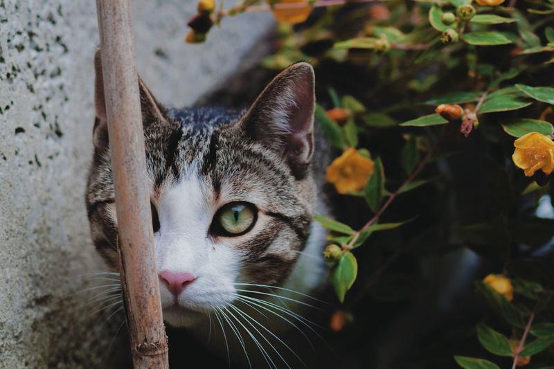 Close-up portrait of cat behind plants