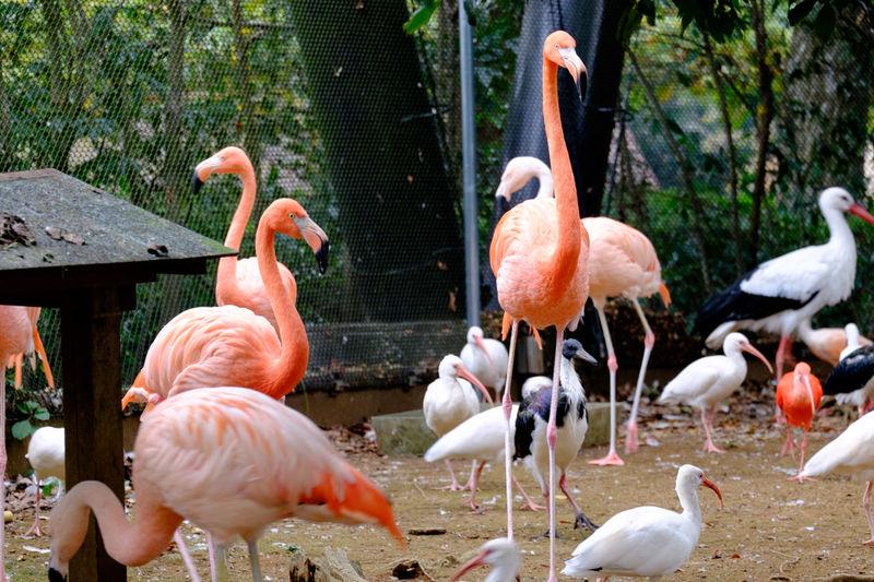 Birds on field in zoo