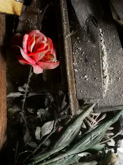 Faded life Red Indoors  No People Close-up Freshness Getting Inspired Sad Art Full Length Love Abandoned Abandoned Places Close Up Colorful Full Frame Focus On ForegroundArt, Drawing, Creativity Flower Faded Faded_world Faded Beauty Rose - Flower Lost Headshot Color