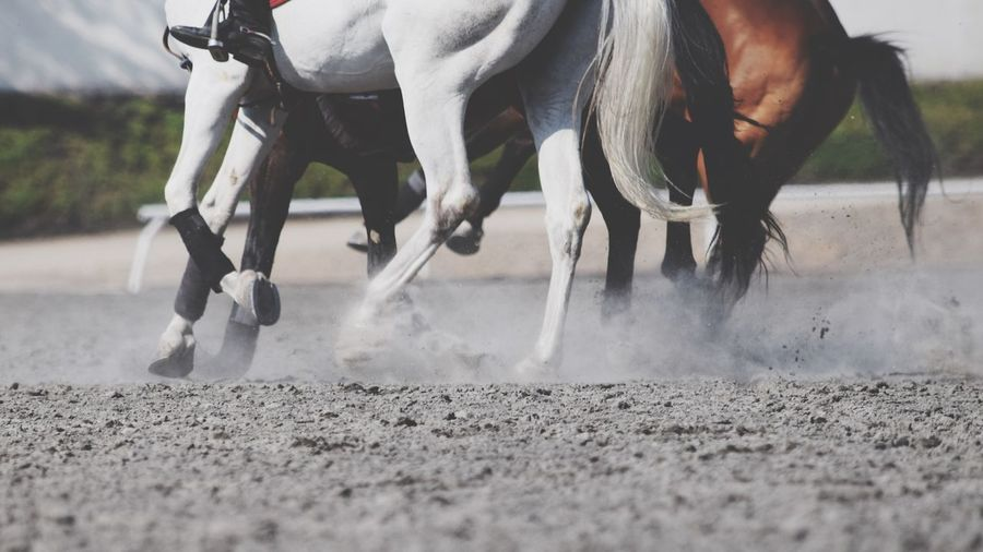 Low angle view of horses running on field