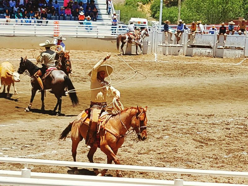 Horse Mammal Domestic Animals Outdoors Day Real People FNSM17 Hollydays Fiesta Mexicana Charreria