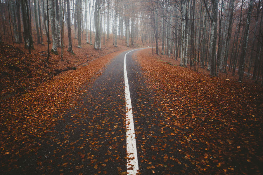 Autumn Road Autumn Collection Autumn Leaves Day Fall Roads Foggy Morning Forest Forest Road Landscape Landscape_Collection Lines And Shapes Misty Morning Nature Nature_collection Nature_perfection No People Outdoors Road Road Road Trip Roadside The Way Forward Tranquil Scene Tree Tree Trees