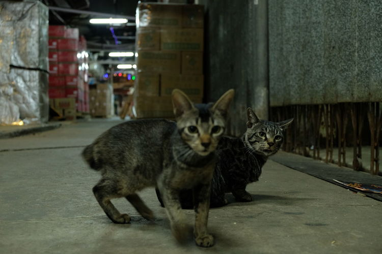 Meow Meow🐱 Cats Cats Of EyeEm Cats 🐱 Cat Lovers Cats Lovers  Fujifilm Fujifilm_xseries Cat Photography Neko Kot Chat Gato Gatto Katze 貓 猫 Cat