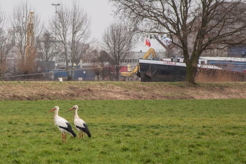 Two storks and a ship named luckily Bird Storks Stork Ship Nautical Vessel Animal Themes Animals In The Wild Grass Field Nature Landscape Outdoors Eyemphotography EyeEm Best Shots Eye4photography  Nikon