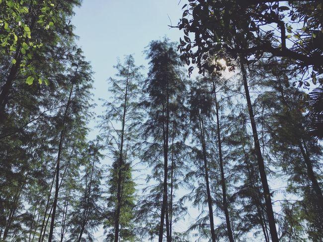 Tree Trunk Nature China Forest Low Angle View Like4like Hkig Ukig Clear Sky Sky Day Outdoors