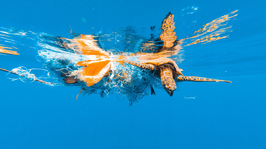 Close-up of entangled sea turtle on a ghost net