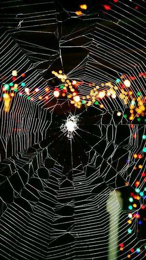 Spiderhouse Spider Spiderweb