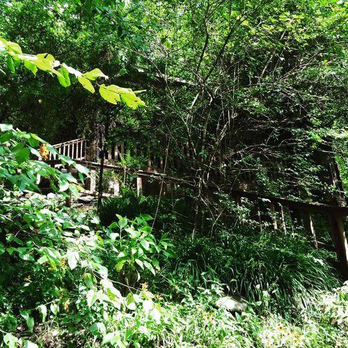 Nature On Your Doorstep OpenEdit