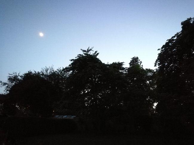 Love Midsummer's longest evening Summer Evening Midsummer EyeEm Nature Lover Balmy Evening Astronomy Tree Moon Silhouette Sky