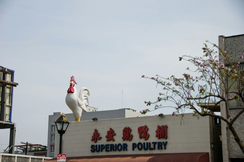 the Superiority of Poultry @ Chinatown, Los Ángeles