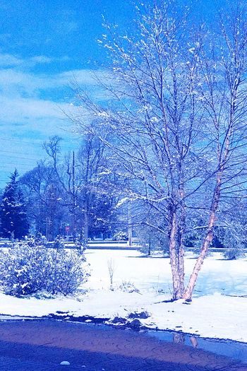 Tree Nature No People Tranquility Beauty In Nature Sky Outdoors Snow Scenics Tranquil Scene Cold Temperature Day Water