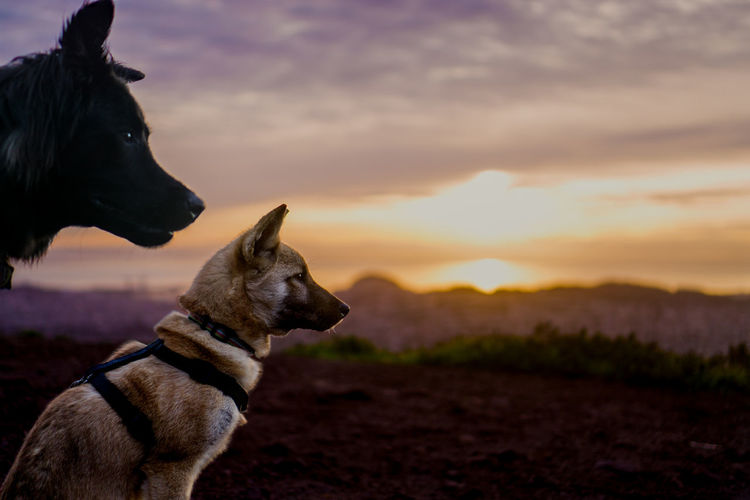 Animal Animal Themes Boston Terrier Close-up Cloud - Sky Day Dog Domestic Animals Gazing Gazing At Nature Hiking Hikingadventures Mammal No People Outdoors Pet Collar Pet Equipment Pets Shepherd Sky Sony A6000 Sunrise Sunset