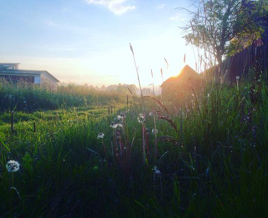 Sunset Hometown Summer Countryside