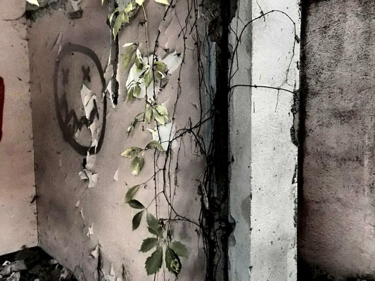 Urban Art Mural Paintings Urban Photography Urban Art Street Photography Ruined Building Ruin Ruine Street Art Reality