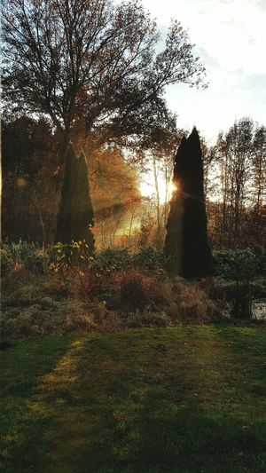Nederland Netherlands Nature Tree Sunlight Holland 💕 Wintertime