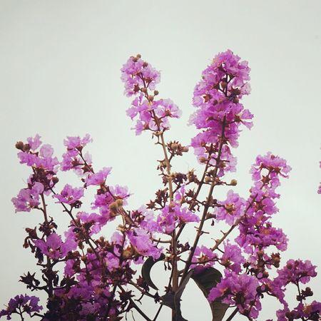 Wildflowers Memycameraandi OpenEdit Eye4photography