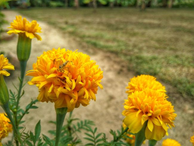 A spider on a yellow flower Nature Green Earth Flower Head Flower Yellow Nature Reserve Rural Scene Marigold Sunflower Petal Wildflower Flowering Plant Botanical Garden Summer Road Tripping