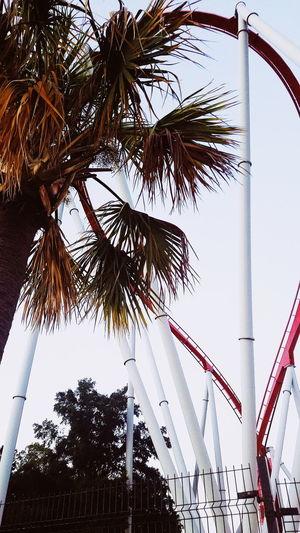 Tree Palm Tree City Sky Architecture Amusement Park Ride