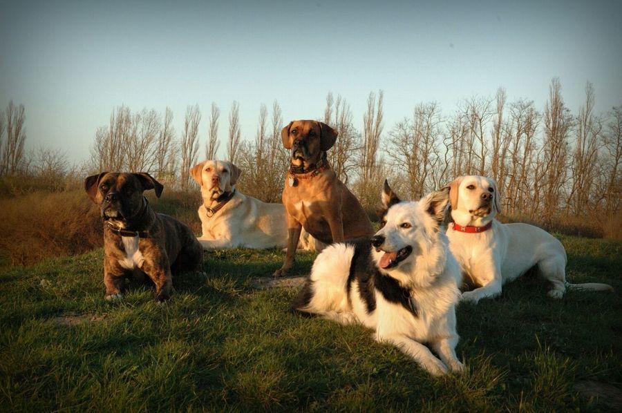 Gassigruppe 🐕🐶🐾Gassirunde Kassebohm Hunde Dogs Pack Bestfriends Dogoftheday RudeL Open Edit Dogs Of EyeEm Animals