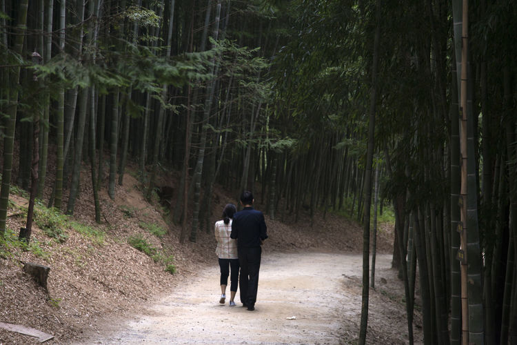 Juknokwon, the famous bamboo park in Damyang, Jeonnam, South Korea Couple Damyang Hanging Out Juknokwon Adult Bamboo Forest Bamboo Park Beauty In Nature Day Forest Forest Photography Full Length In The Forest Man And Woman Men Nature Outdoors Pathway People Real People Rear View Togetherness Tree Two People Walking