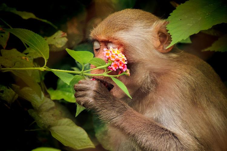 Close-up of monkey eating plant