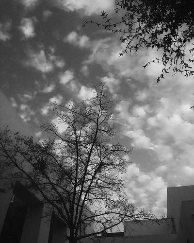 Black Igersbnw Iiframe Bwoftheday Shadow Noiretblanc Noirlovers Bwbeauty Cloudporn Blancinegre Monochrome Bw_lover Byn Blancoynegro Irox_bw Clouds Bw_society Nero Blackandwhite Ic_bw_bw Bwstyles_gf Bandw Beautiful Perfect Urban Spring Fever noir bw mono bnw blackandwhite