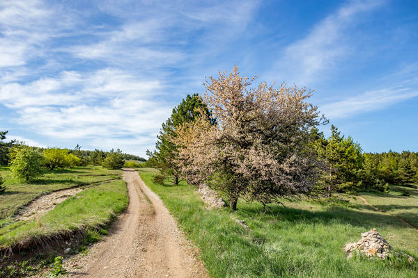 Beauty In Nature Cloud - Sky Day Dirt Environment Field Footpath Grass Growth Land Landscape Nature No People Outdoors Plant Road Scenics - Nature Sky The Way Forward Trail Tranquil Scene Tranquility Tree