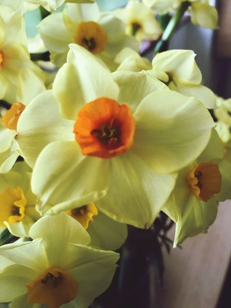 Spring is here Flower Nature Plant Beauty In Nature Yellow Close-up Blooming Eye4photography  EyeEm Gallery EyeEm Best Shots - Nature EyeEm Flower