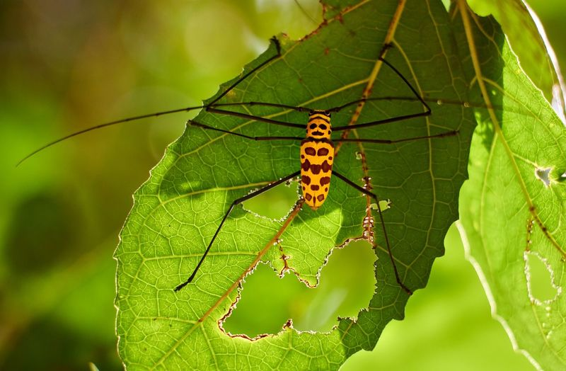 Insect Animals In The Wild Animal Wildlife Invertebrate Animal Themes Animal Leaf Plant Part One Animal Green Color Nature Focus On Foreground Close-up Day Plant No People Caterpillar Beauty In Nature Sunlight Outdoors Butterfly - Insect