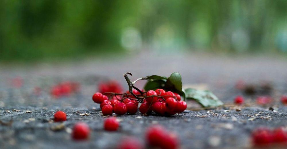 Завтра будет осень. Nature Red рябина
