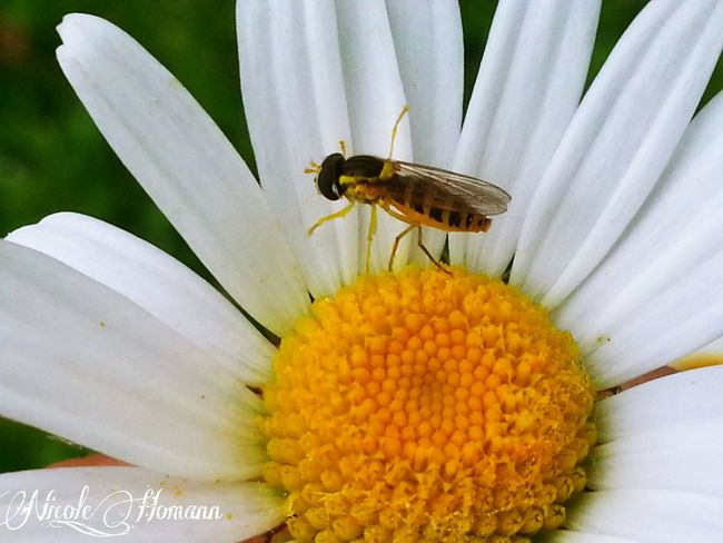 Flowers Insects  Spring Flowers Nature_collection