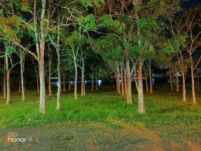 Teste Honor 9 Modo Noturno 1 Tree Tree Trunk Grass Green Color
