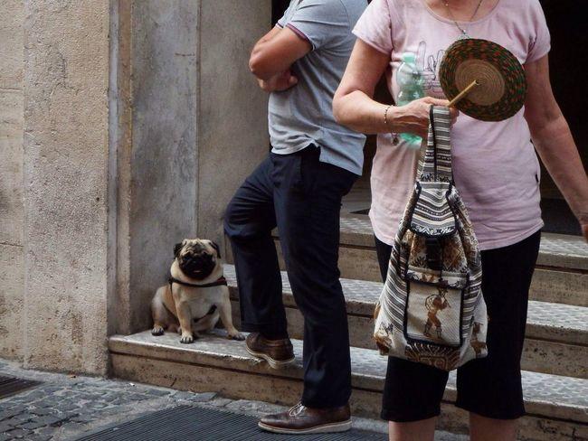 Pet Portraits Pug Animal Photography Photographer Photooftheday Fun Happy Italy Rome The Traveler - 2018 EyeEm Awards