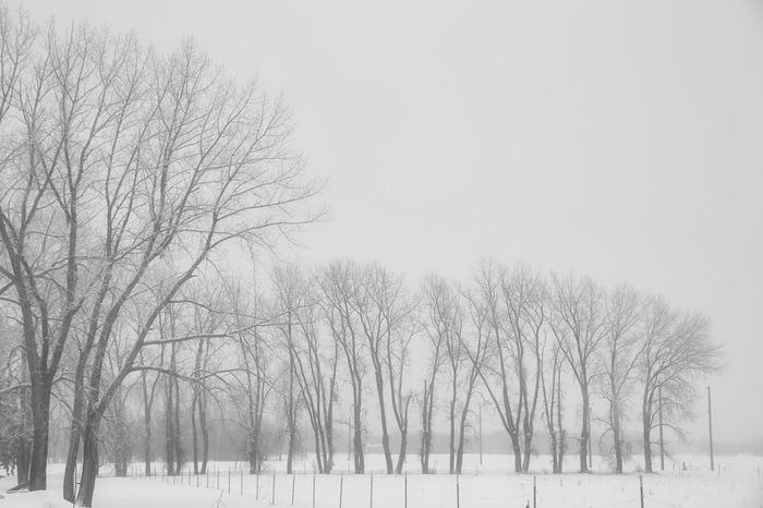 Bare Tree Beauty In Nature Bleak Branch Clear Sky Cold Temperature Day Field Frozen Landscape Nature No People Outdoors Scenics Sky Snow Snowing Tranquil Scene Tranquility Tree Weather Winter Shades Of Winter