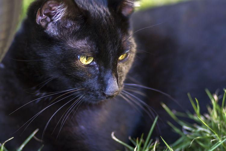 Close-up of black cat looking away