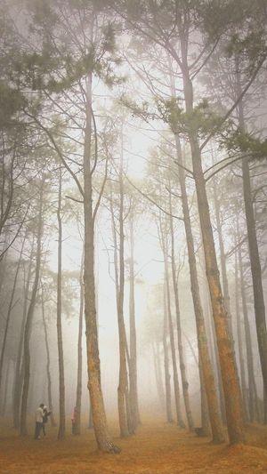 Mist Fog Tree Thailand Relaxing Enjoying Life Art Getting Inspired