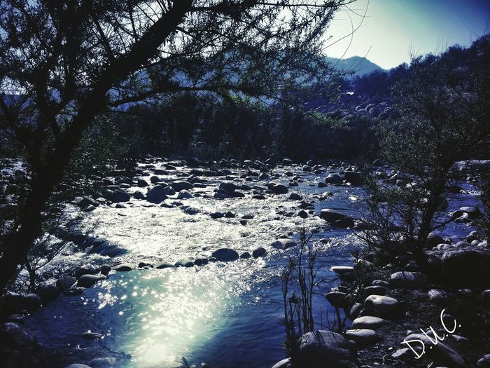 The beauty in nature. Nature Photography Outdoor Photography Riverside Photography Riverview