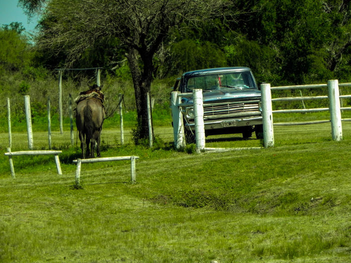 Old Truck and young Horse resting under the tree Animal Themes Argentina Campo Car Day Domestic Animals Entre Rios Field Grass Green Color Horse Lo Viejo Y Lo Nuevo Mammal Mode Of Transport Nature No People Old And Young One Animal Outdoors Tree Truck